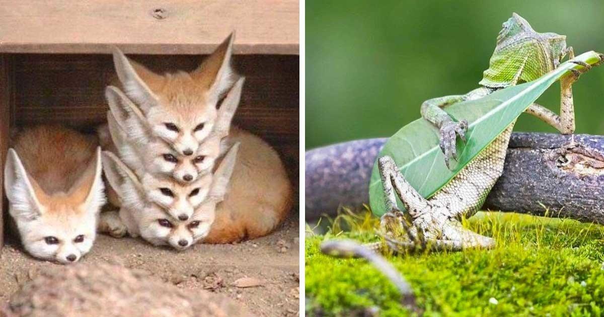 рассказали, мир животных картинки и интересные вещи же