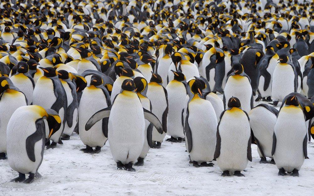 картинки про человека пингвина модель разносторонне