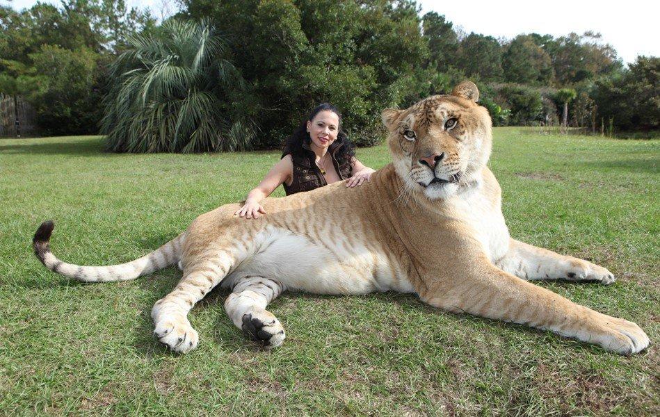 тех людей, самые большие животные мира фото того, что