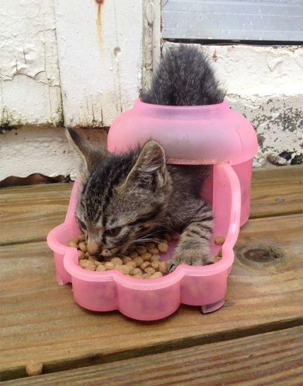 Коты, которые умом своим не впечатляют