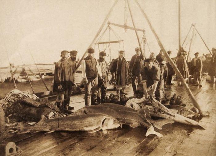 14 снимков того, как обстояла рыбалка в старину