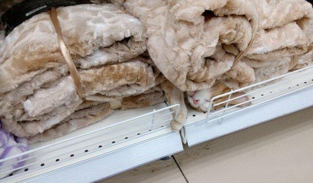 Приключения в супермаркете или 15 странных товаров