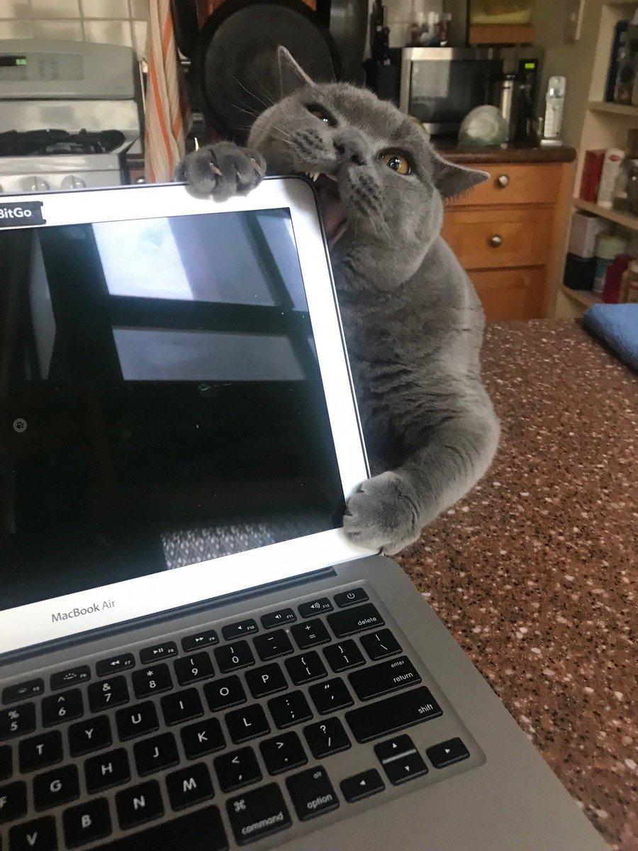 13 счастливых котов