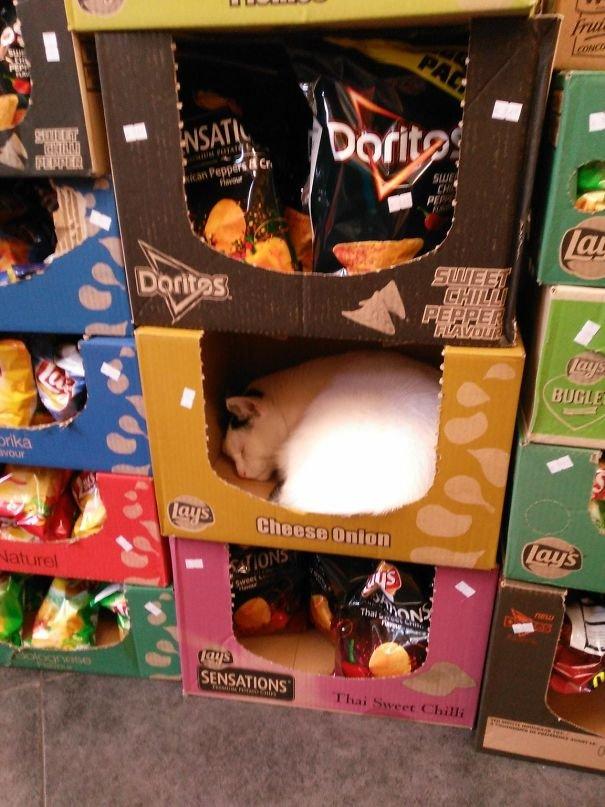 В супермаркетах скучно не бывает, главное не забывать смотреть по сторонам