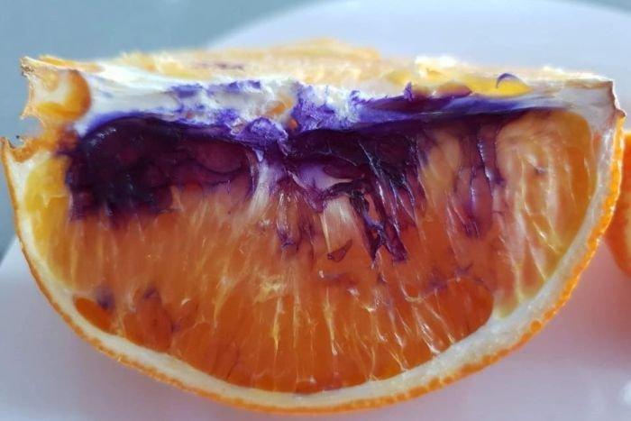 Австралийка нарезала апельсин, а наутро на нём появились фиолетовые пятна. Экспертиза всё прояснила