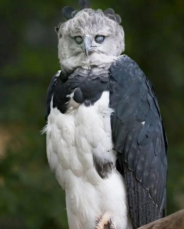 14 существ, внешний вид которых впечатляет и отталкивает одновременно