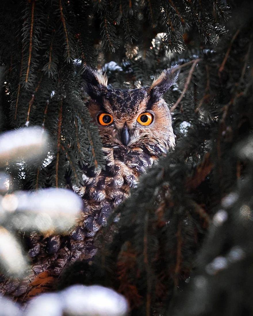 Финский фотограф доказал, что сказочный лес реален и находится он в Финляндии