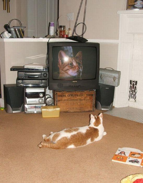 13 животных, обожающих телевидение