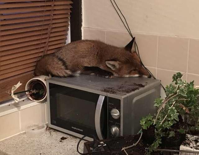 Женщина обнаружила у себя на кухне небольшое дремлющее животное