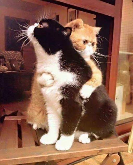 13 смешных котов, что своими выходками заставят вас смеяться