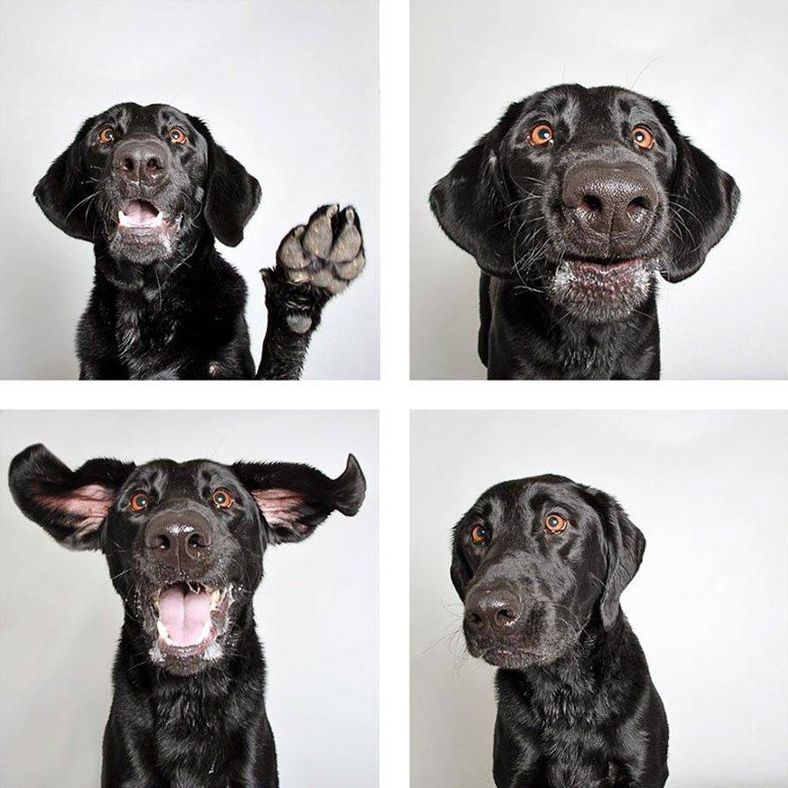 В приюте для собак поставили фотобудку, и теперь больше питомцев находят себе дом