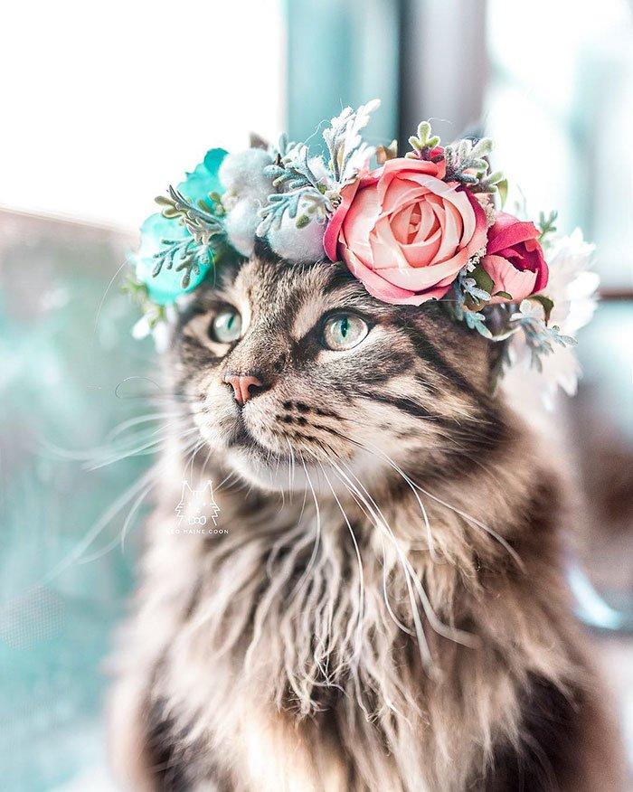 Мастер делает цветочные короны для животных, и они выглядят величественно!