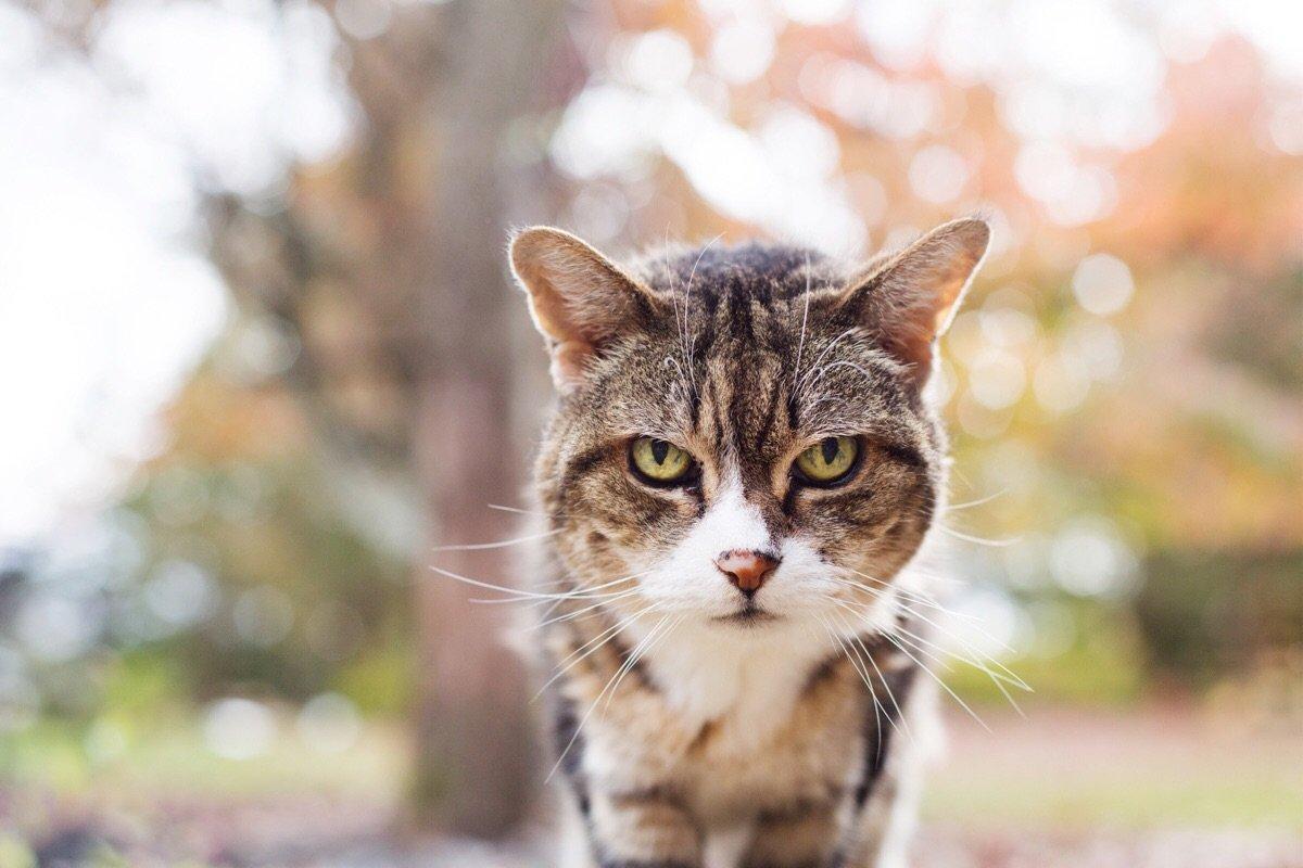 14 примеров того, как стареют коты