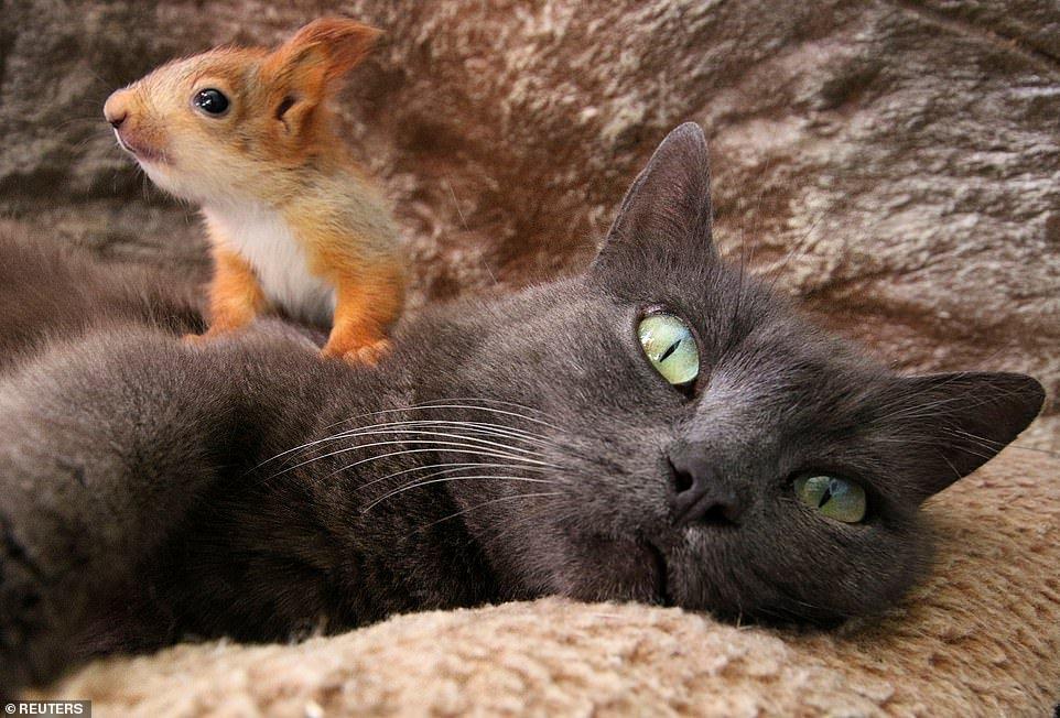 Крымская кошка усыновила бельчат и покорила весь мир