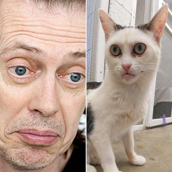 Познакомьтесь с Марлой, кошкой, которая выглядит как Стив Бушеми