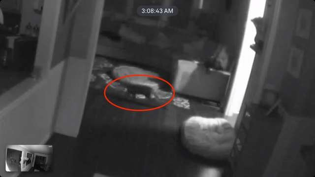 Женщина обнаружила, что неизвестный кот вламывался в ее дом каждую ночь