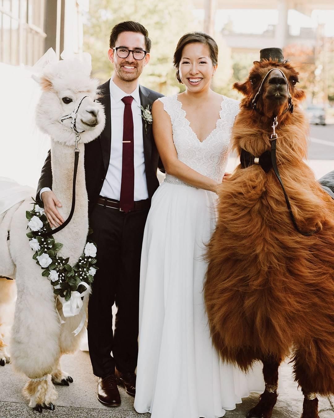 Теперь на свадьбу можно взять в аренду ряженных лам