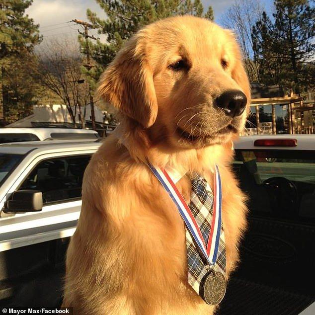 Золотистый ретривер Макс назначен мэром калифорнийского города