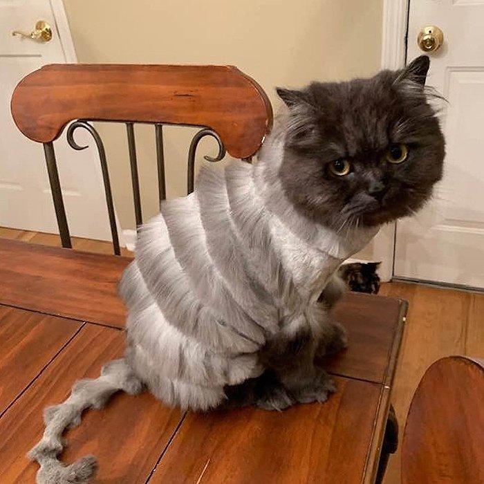 Отец семейства взял кота к парикмахеру и превратил его в гармошку