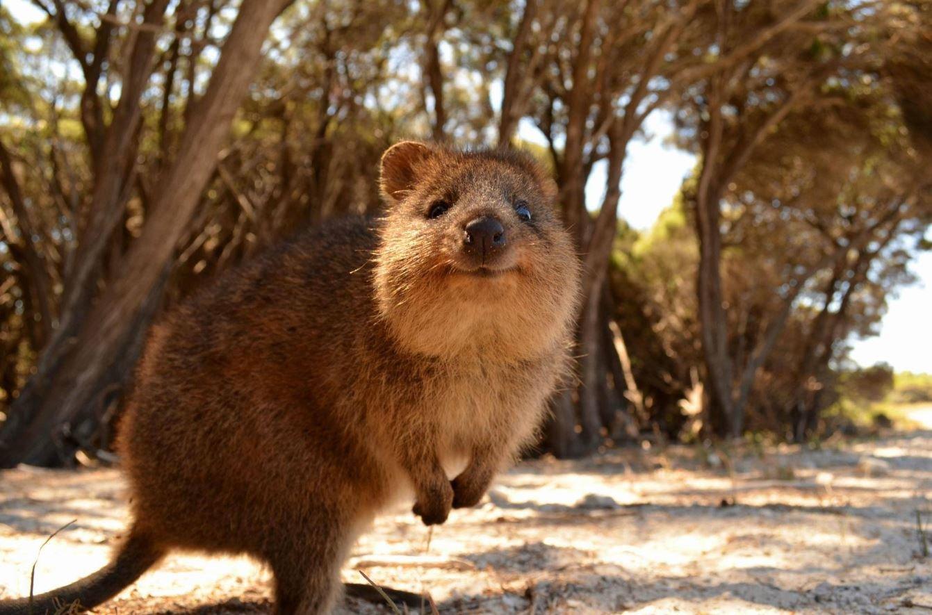 10 фактов о животных, которые умиляют
