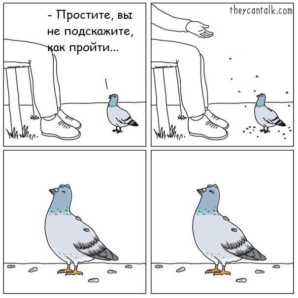 Что сказали бы птицы, если бы умели говорить: забавные комиксы
