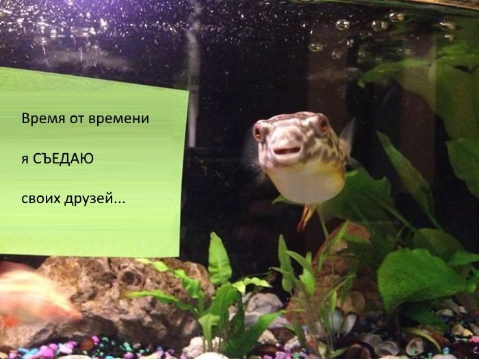 Люди делятся поступками своих рыбок, которые оказались не такими уж милыми