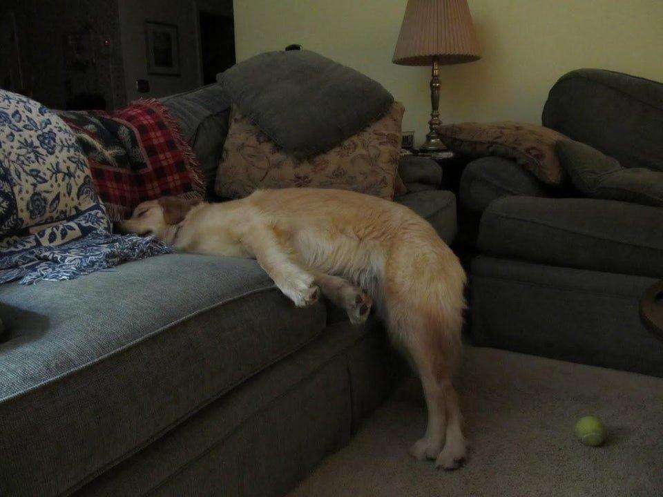 15 собак, которым наплевать, как они выглядят во время сна