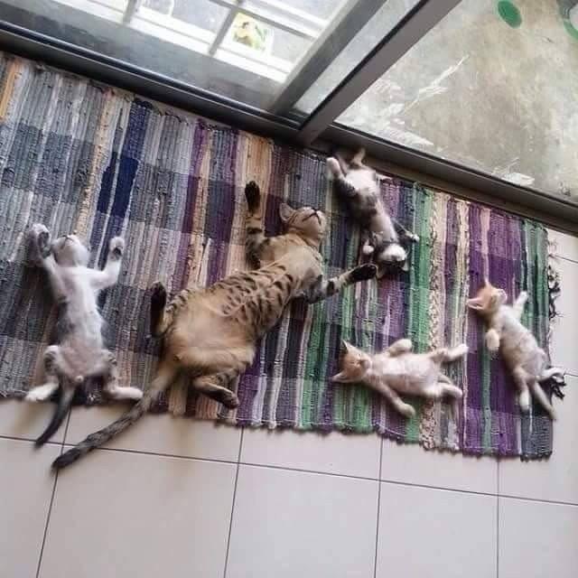 15 харизматичных котов и собак, мимо которых нельзя пройти