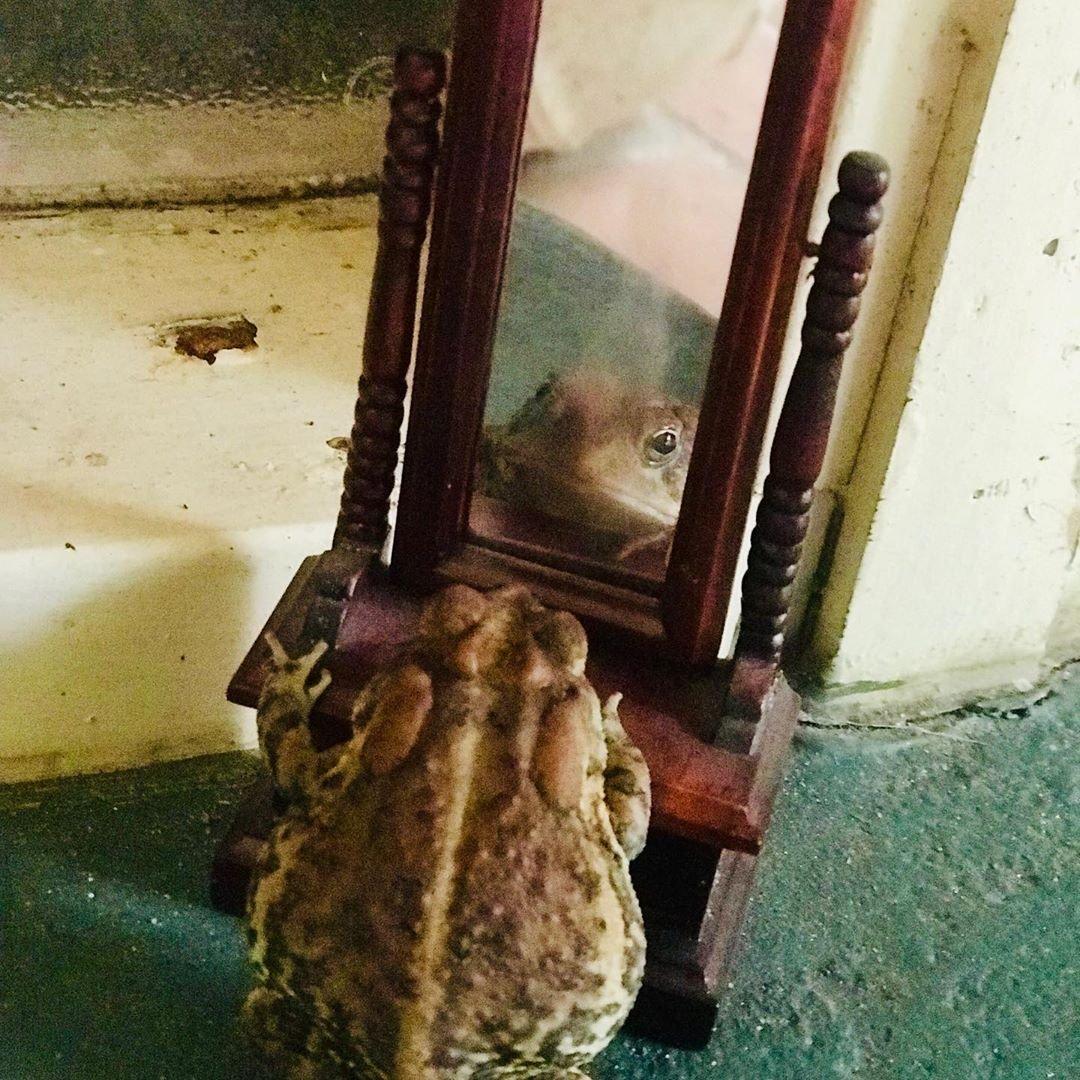 У жабы Тоби в Инстаграме почти 50 тысяч подписчиков