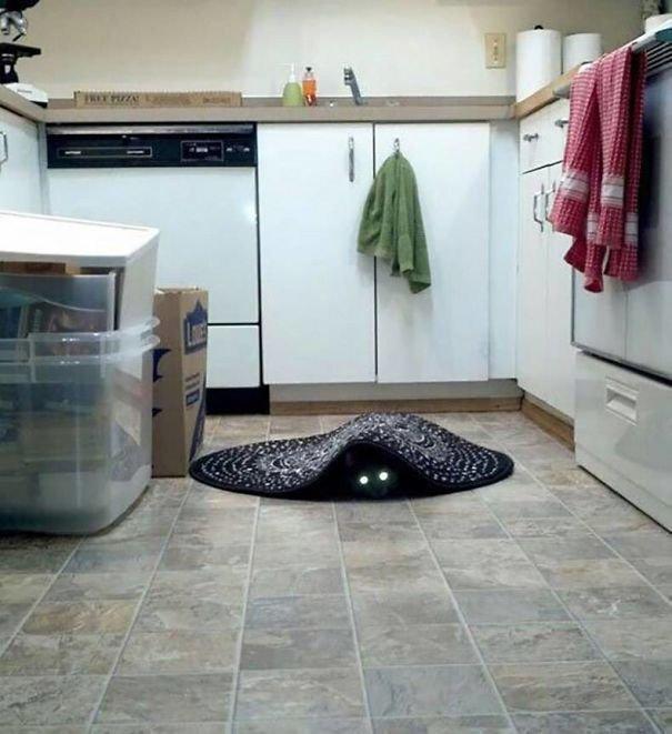 Большой кот следит за тобой: 12 усатых шпионов, от которых не скроешься