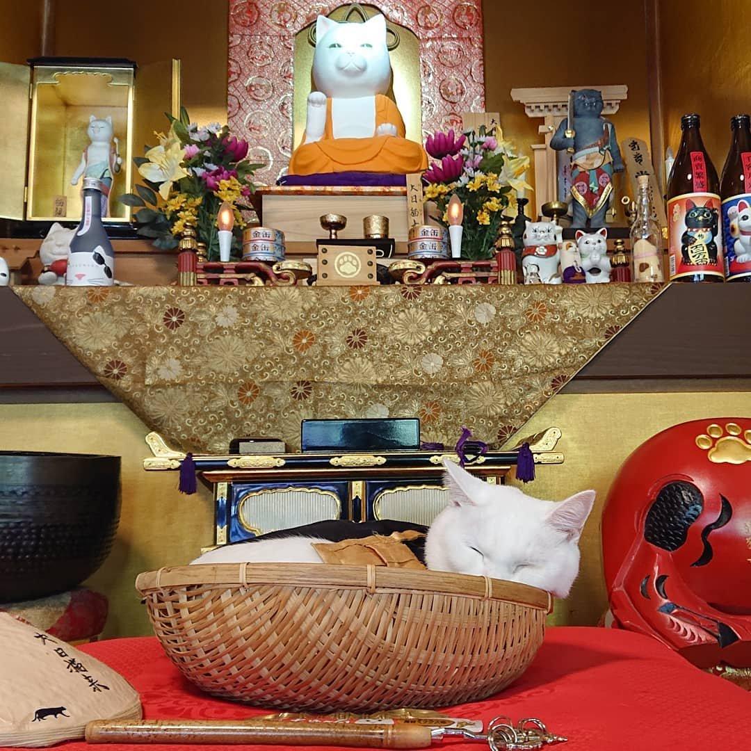 В Японии есть кошачий храм, и его монахи самые милые