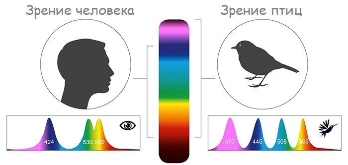 Каким птицы видят мир по сравнению со зрением людей