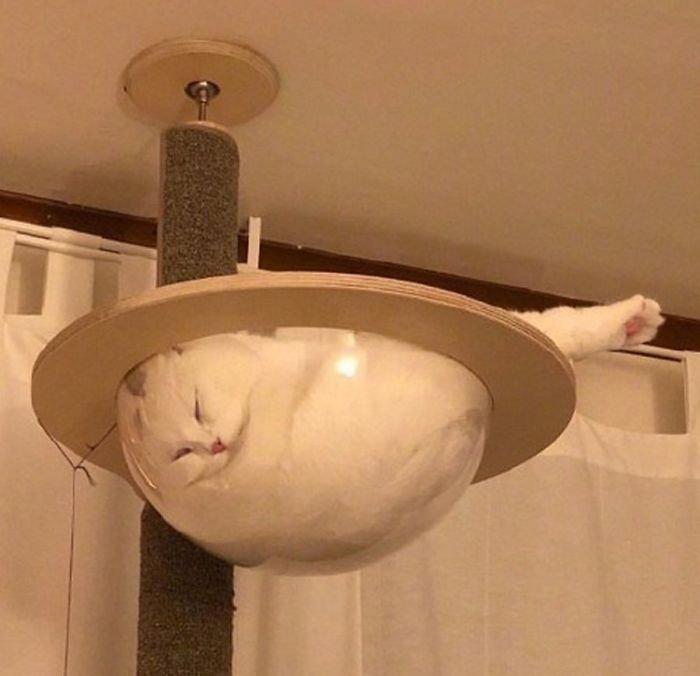 14 фото, после которых сложно не полюбить котов