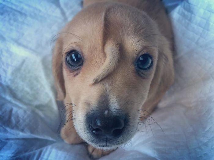 Маленький единорожек: спасатели нашли щенка с хвостом на лбу