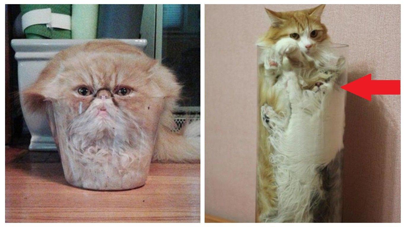 Жидкие коты: 15 примеров, как они заполняют собой посуду