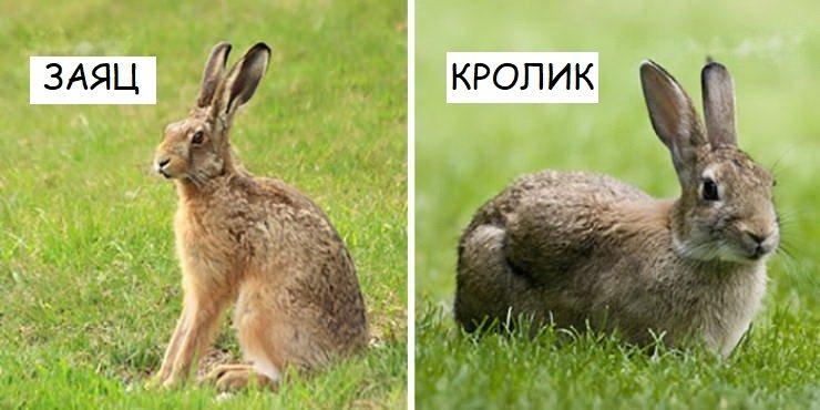 Внешне похожие, но генетически далекие животные