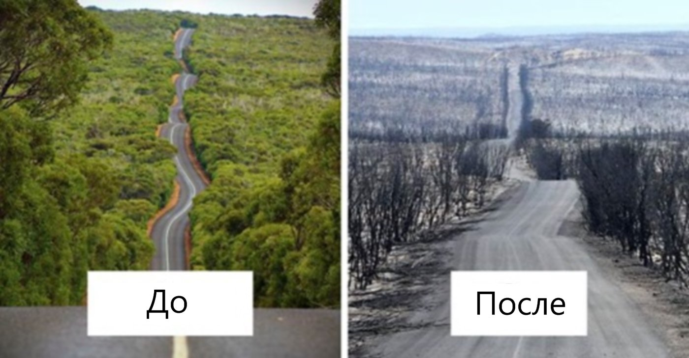 12 кадров, демонстрирующих, какой ущерб нанесли Австралии пожары
