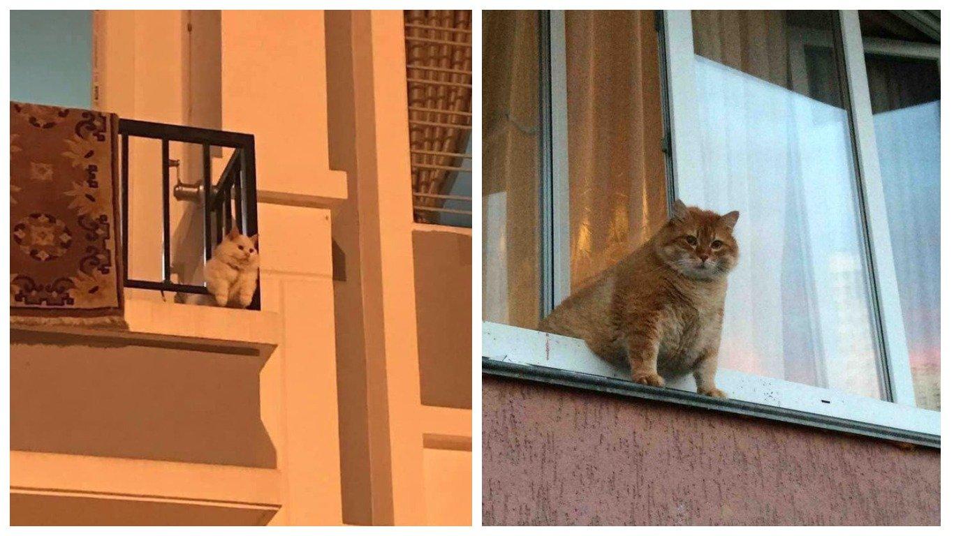 14 фото о том, что коты жить не могут без окон