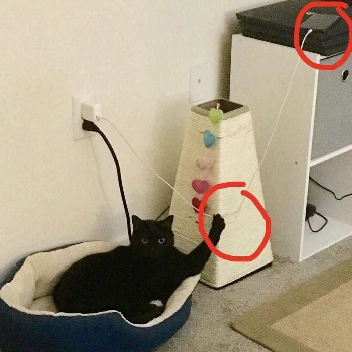 15 фото о том, что наглости котов нет предела