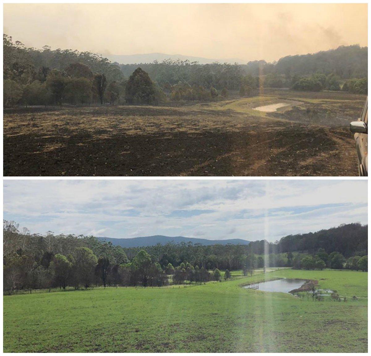 Как сгоревшие земли Австралии выглядят после недели дождя