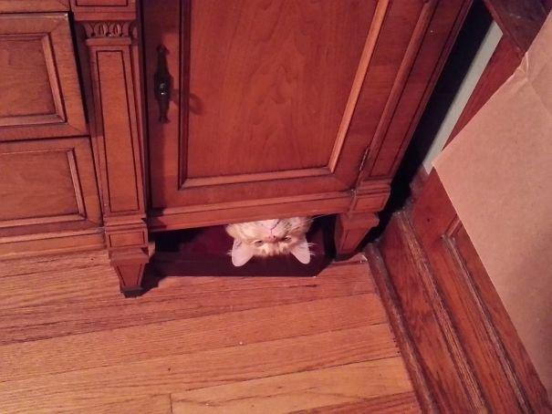14 котов со странными привычками
