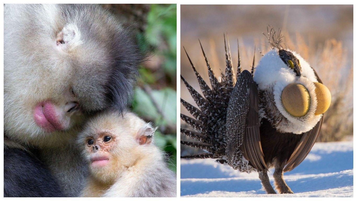12 животных, на которых природа не пожалела фантазии