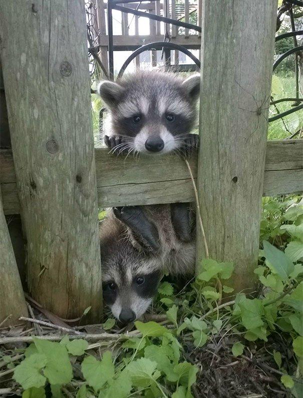 14 животных по соседству