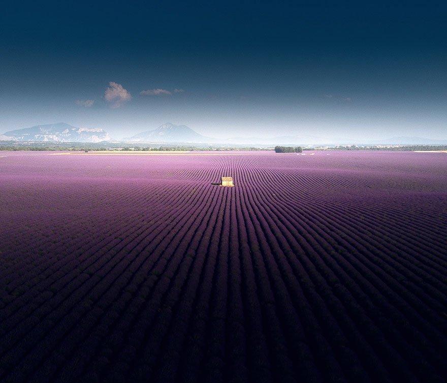 Завораживающие аэрофото лавандовых полей с юга Франции