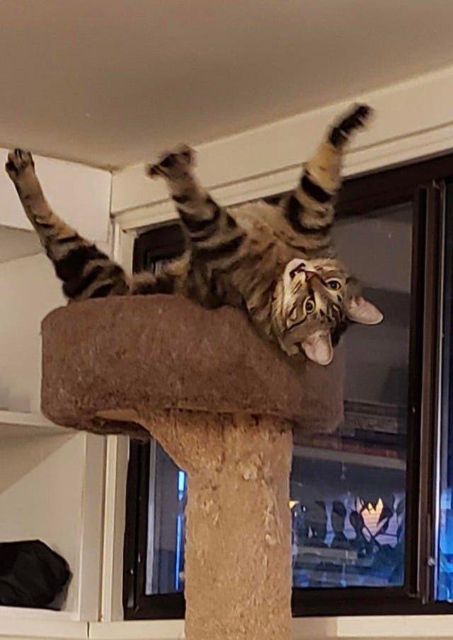 14 кадров, доказывающих, что будни котов скучными не бывают