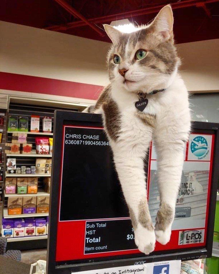 22 кота, что выглядят так, будто владеют теми магазинами, в которых обитают