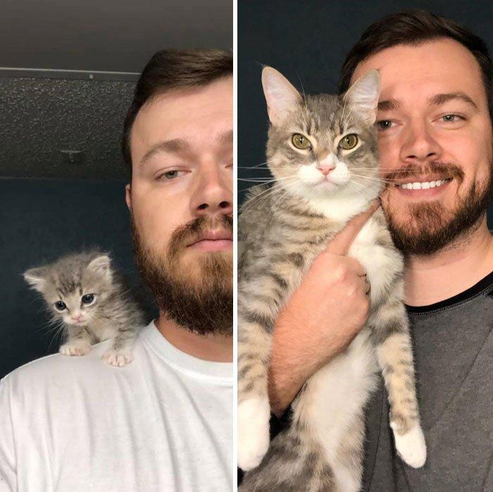 15 фото кошек, которые обрели новый дом и счастливую жизнь
