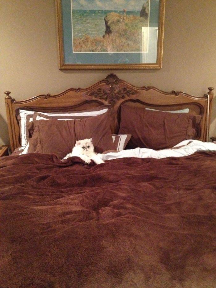 15 питомцев, которые любят занять место хозяина в постели