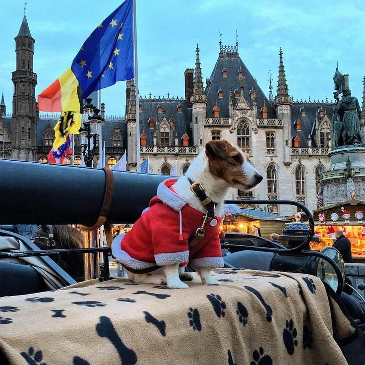 10 интересных фактов о жизни в Бельгии