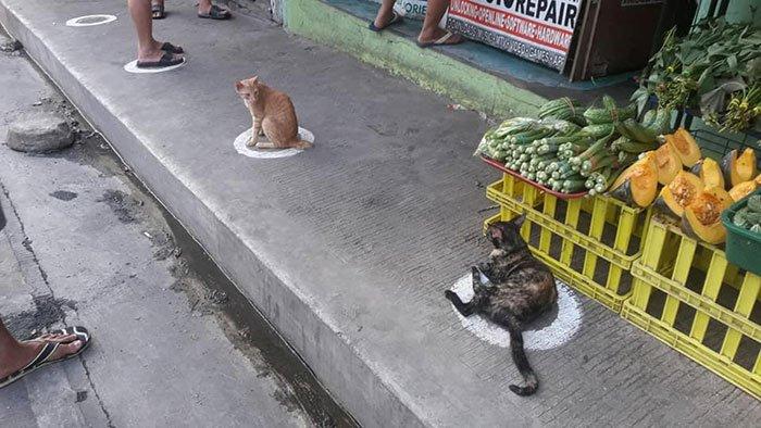 Кошки на Филиппинах следуют правилам карантина, занимая круговые метки возле магазинов